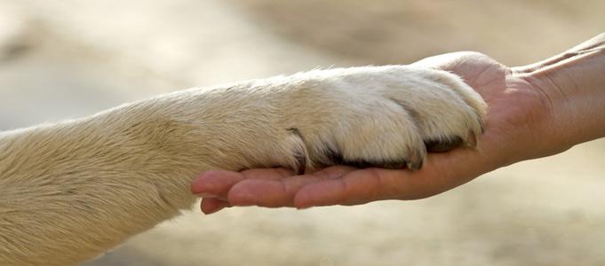 patte et main